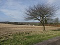 Walk Farm field, Little Weighton - geograph.org.uk - 674257.jpg