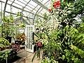 Warm Temperate House - Wellesley College - DSC09754.JPG