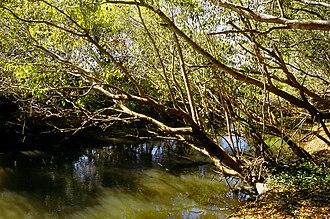 Kasanka National Park - Wasa River in the park