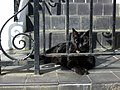 Watching the world go by - geograph.org.uk - 1276985.jpg