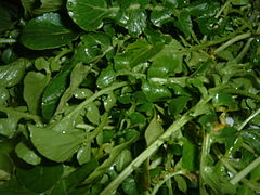 Watercress (2)