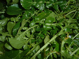 Watercress - Leaves