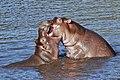 Western Serengeti 2012 06 03 3801 (7557807536).jpg