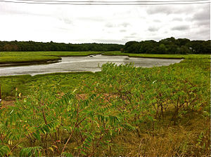 Weymouth Back River - Upper tidal marsh of Weymouth Back River taken from Great Esker Park, looking upstream from below Humane Society.