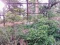 White Tiger Safari, Mukundpur.jpg
