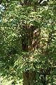 Wiki DSC00083 AlteEibe Detail Schönberg 431.2-73.jpg