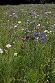 Wild Flowers (2724070475).jpg