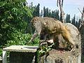 Wildlife in North Pakistan 2.jpg