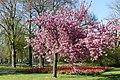 Wilhelminapark, Breda P1360746.jpg