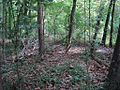 William B Clark Conservation Area Rossville TN 005.jpg