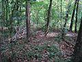 William B Clark Conservation Area Rossville TN 005.jpg