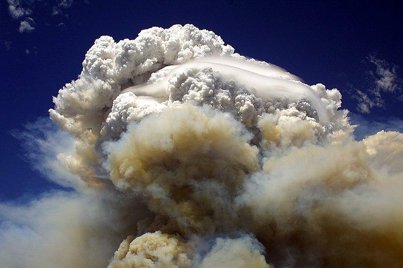 File:Willow Fire AZ 7 8 2004 SE burnout 035-001.jpg