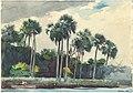 Winslow Homer - Red Shirt, Homosassa, Florida (1904).jpg
