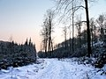 Winter im Teutoburger Wald19.jpg