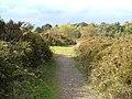 Woodbury Common - geograph.org.uk - 163106.jpg