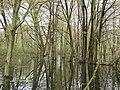 Woodland Trail, Point Pelee National Park, Leamington, ON.jpg