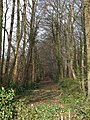 Woodland track, Quarry Plantation - geograph.org.uk - 1713971.jpg