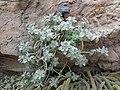 World Deserts - US Botanic Gardens 18.jpg