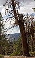 Yosemite (1463898429).jpg