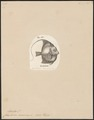 Zanclus canescens - 1700-1880 - Print - Iconographia Zoologica - Special Collections University of Amsterdam - UBA01 IZ13500507.tif