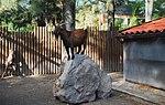 Zoo de Lisboa by Juntas 65.jpg