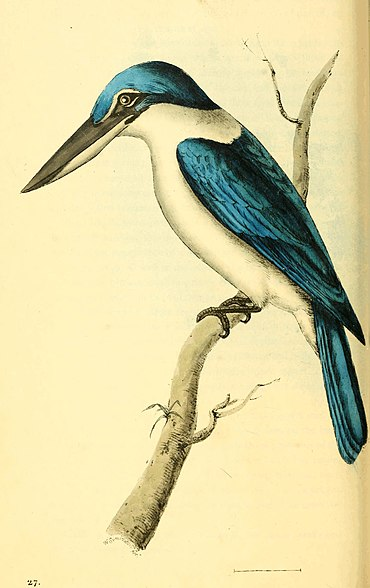 Zoological Illustrations Volume I Plate 27.jpg