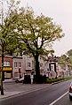 Zottegem Heldenlaan Vredesboom (1) - 190548 - onroerenderfgoed.jpg