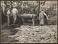"""Iron Chink"" at work in Pacific American Fisheries cannery, 1905 (MOHAI 7030).jpg"
