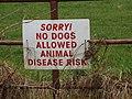 """Sorry^ No dogs"" sign near Monroe, Castlebridge - geograph.org.uk - 1294468.jpg"
