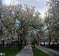 (((پارک ملت مراغه در بهار ))) - panoramio (1).jpg