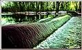 (360 365) Community Lake in Wallingford, CT. (29499456151).jpg