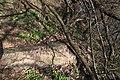 «Олександрія» Виходи гранітуIMG 1696.jpg