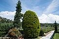 Χαλκιδική, Σιθωνία, Ελιά - Athena Pallas Village - panoramio.jpg