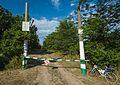 Баранівський ліс-2.jpg