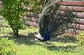 Бердянский зоопарк 100.jpg