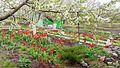 Весна^ Весна - panoramio.jpg