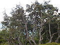 Вид из горы Гымба 1491м. 3013.jpg