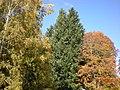 Витоша през есента.jpg