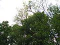 Дендрологічний парк 120.jpg