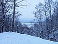 Зимняя опушка леса.jpg