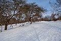 Зимові алеї в парку заріччя.jpg
