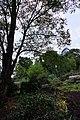 Київ, ботанічний сад імені академіка Олександра Фоміна.jpg