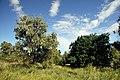 Летний день на южном берегу Клебан-Бык - panoramio.jpg
