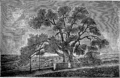 Мамврийский дуб (БЭАН).png