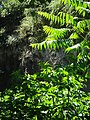 Миоценски спруд Ташмајдан, природни споменик, 001.JPG