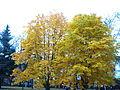 Октябрь в Нижнем Новгороде (4).jpg