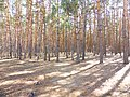 Парк «Танаис», Воронеж.jpg