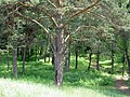 Парк Минуса - panoramio.jpg