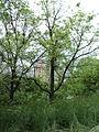 Парк шума Гази Баба во мај (141).JPG