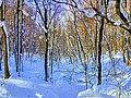 Региональный ландшафтный парк «Диканский» зимой 6.jpg